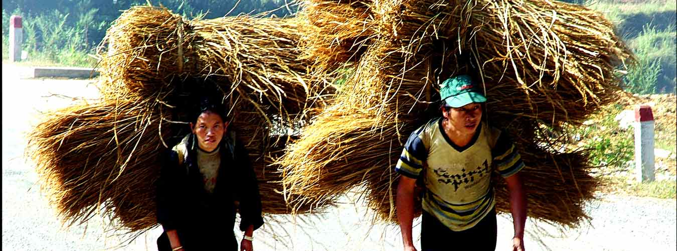 Rice harvest_2 - Vietnam Tours - Vietnam Tour - Vietnam Travel Agency - Vietnam Travel Company