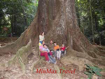 1000 year old tree in Cuc Phuong National Park