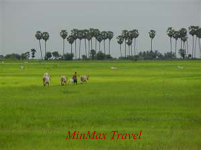Countryside in Phnom Penh