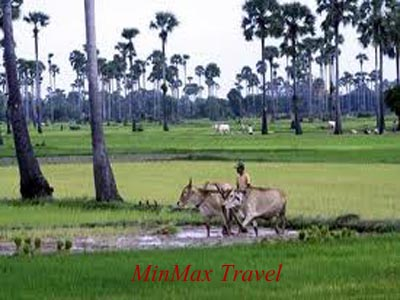 Visit Countryside in Siem Reap